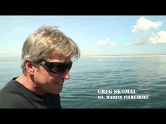 OCEARCH Expedition Update #1 - YouTube #seewhatsoutthere