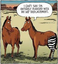 hip replacement humour- blog about staying active through illness and injury (arthritis)