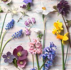 Our new Pinterest board! Follow @gardeningforever on Instagram.
