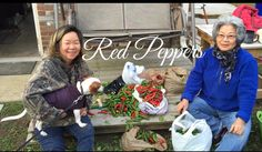 HD Red Pepper Harvest  Subscription FREE