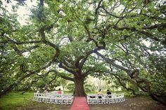 Abbotsford convent- heritage oak tree