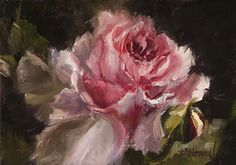 Pamela C.Newell - abraham-darby-rose.jpg (900×633)