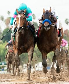 Gormley (left) and American Anthem (right) American Anthem, Run For The Roses, Churchill Downs, Horse Names, Sport Of Kings, Racehorse, Thoroughbred, Horse Racing, Kentucky Derby