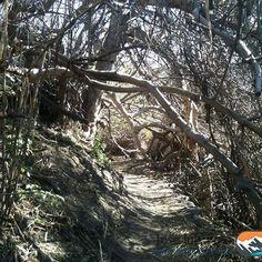 Ruta del #mamut #padul #granada #hiking #senderismo