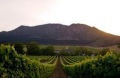 horseback riding through the wine lands at  Spier in Stellenbosch South Africa   http://www.spier.co.za/