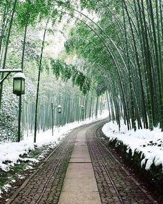 Arashiyama Bamboo in Kyoto 😘 #Japan #japon #kyoto #arashiyama #bamboo #picoftheday #visitjapan #travel #placestovisit #kansai #tourism #onlyinjapan