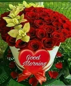 546 best gd mrng images on pinterest in 2018 good morning wishes
