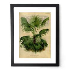 Palm Giclée Print