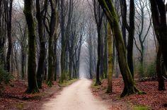 una passeggiata nel bosco.