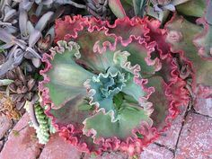 great succulent information