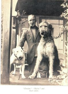 Dog illustrator Cecil Aldin's Bull Terrier 'Cracker' . The only dog ever to have an obituary in the The Times newspaper.