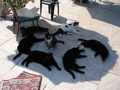 cats in shade