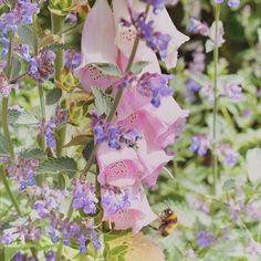 Katie Craven (@katiecravenuk) • Instagram photos and videos British Summer, English Country Gardens, Scarf Design, Fashion Brand, Floral Wreath, Bee, Photo And Video, Videos, Photos