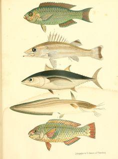 Atlas des poissons vénéneux; - Biodiversity Heritage Library