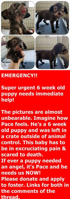EMERGENCY!! Super urgent 6 week old puppy needs immediate help!   https://www.facebook.com/angelsrescue/photos/a.272202117911.143112.271191497911/10154533574592912/?type=3&theater