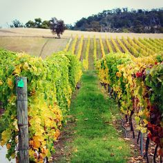 Vineyards in Richmond, Tasmania / A comprehensive local's guide to Hobart / A Globe Well Travelled