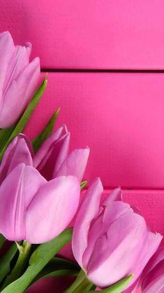 Rosa Carol Jensen Pretty Pink Things