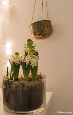 Christmas Diy, Planter Pots, Flowers, Royal Icing Flowers, Homemade Christmas, Flower, Diy Christmas, Florals, Floral