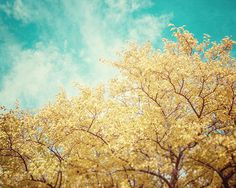 Nature Photography Autumn Landscape Photograph Yellow Tree Picture Teal Sky - Golden Aqua Fall Photograph - Dreamy Nature Wall Art.