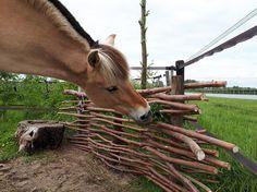 Dream Stables, Dream Barn, Horse Paddock, Santa Ana, Horse Ranch, Tallit, Farm Animals, Habitats, Horses