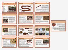 die 61 besten bilder von regenwurm in 2019 earthworms day care und insects. Black Bedroom Furniture Sets. Home Design Ideas