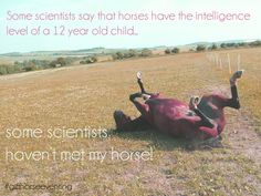 Very true my horse has no brains #horse #love #quote