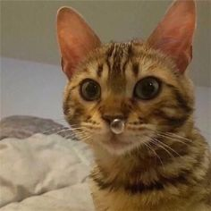 Love Cute Animals shares pics of playful animals, cute baby animals, dogs that stay cute, cute cats and kittens and funny animal images. Funny Animal Pictures, Cute Funny Animals, Cute Baby Animals, Animals And Pets, Funny Cats, Cats Humor, Funny Cat Pics, Fun Funny, Funny Photos