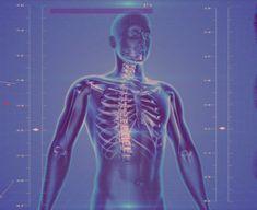 A pajzsmirigyek rendkívül fontosak az egészség szempontjából, hiszen a nyak környékén elhelyezkedő, pillangó alakú páros szerv több belső szerv működésért is felelős. Interesting Facts About Humans, Amazing Facts, Improve Kidney Function, Human Body Facts, Endocannabinoid System, Nanotechnology, Human Anatomy, How To Introduce Yourself, Health Benefits