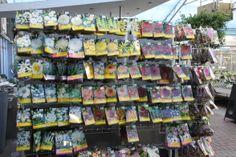 Bloemzaad voor planten in alle geuren en kleuren