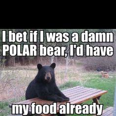 Black bears never catch any breaks