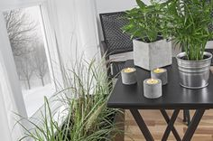 Fresh Air From Plants: 20 Plants to Purify Your House | Seventh Generation