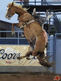 Bucking horse off the ground~this is called sun fishing (belly skyward) and the rider usually ends up squished unless he is fast on his feet! Rodeo Cowboys, Real Cowboys, Bareback Riding, Horse Riding, Vaquera Sexy, Rodeo Events, Cowboy And Cowgirl, Cowgirl Style, Rodeo Life