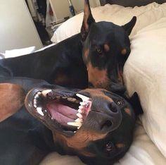 sweet couple / black / dogs