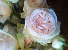 White OHara rose for bridal bouquet