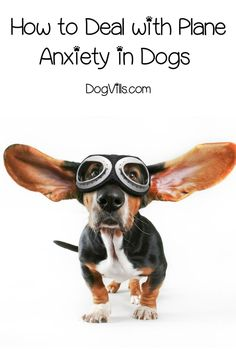 Did you know that some dogs are just as scared to fly as some people? Read on to learn about plane anxiety in dogs and find out how to cope. Dog Care Tips, Pet Care, Tortoise As Pets, Dog Anxiety, Anxiety Tips, Fear Of Flying, Dog Signs, Dog Behavior, Dog Friends