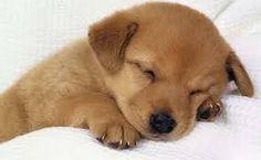 """Résultat de recherche d'images pour """"Puppies"""""""