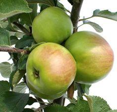 nyari_fontos alma