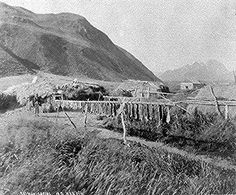 Salmon drying. Aleut village, Old Harbor, Alaska. Photographed by N. B. Miller, 1889.