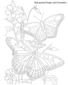 From: Butterflies and Flowers to Paint or Color