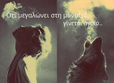 """""""A wolf always remains a wolf, no matter how long we live among humans. Our blood will always remember the call of the wild and will respond it every time."""" - Luna Prescott, a stranger she-wolf :-) She Wolf, Wolf Girl, Vintage Hipster, Hubert Von Goisern, Potnia Theron, Half Elf, Photographie Portrait Inspiration, Howl At The Moon, Red Riding Hood"""
