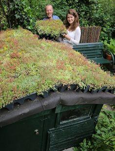Tuinhuis krijgt groen dak - Buitenleven — Het magazine voor levensgenieters