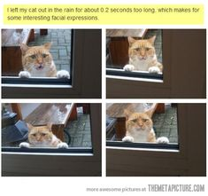 Cats and rain just don't mix…