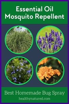 Discover the best essential oil mosquito repellent.  Learn the plants to use to create a homemade bug spray that keeps your summer pest free! via @HealthyNatured