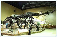 Thermopolis: Museo dei Dinosauri