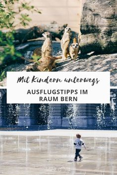 Ausflugstipps im Raum Bern: Was du mit Kindern unternehmen kannst Parks, Berne, Dubai, Mini, Blog, Movies, Movie Posters, Archive, Holiday Travel
