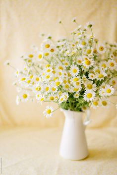 A bouquet of camomile flowers in pitcher by Pixel Stories - Stocksy United Happy Flowers, White Flowers, Beautiful Flowers, Daisy, Deco Floral, Flower Aesthetic, Flower Boxes, Dahlia, Flower Art