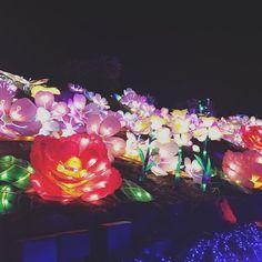 お花のランタンイルミネーション キレーだった #伊豆ぐらんぱる公園 #グランイルミ2016  #お花のランタン