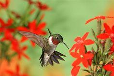 Love when hummingbirds are in my garden!