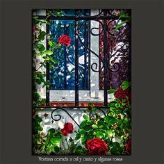 Meridiana claridad (Sofía Serra): Ventana cerrada a cal y canto y algunas rosas