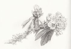Rhododendron Botanical Drawing ~ This is one of my graphite botanical illustration field studies generated from my Nepal travels, exploring and drawing the wildlife and nature of the Rhododendron forests of the Annapurna Region.